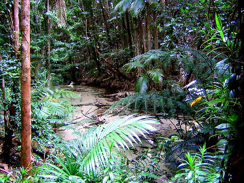 Fraser island jungle