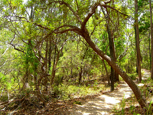 Fraser Island hiking trail