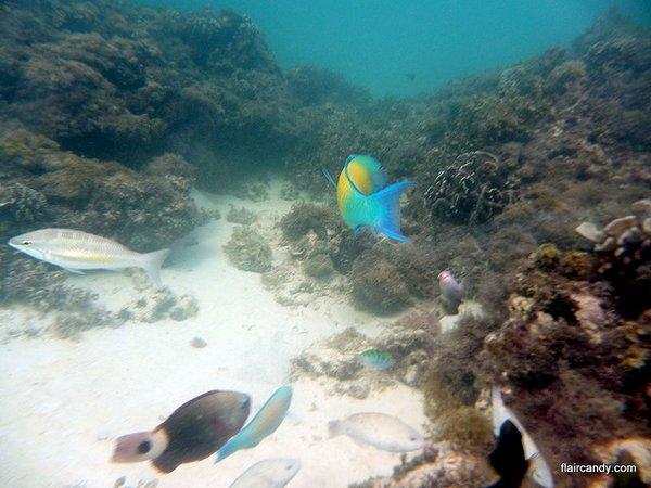 dead coral reef- Boracay Island- Philippines