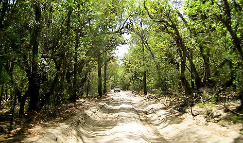 Fraser Island interior sand road