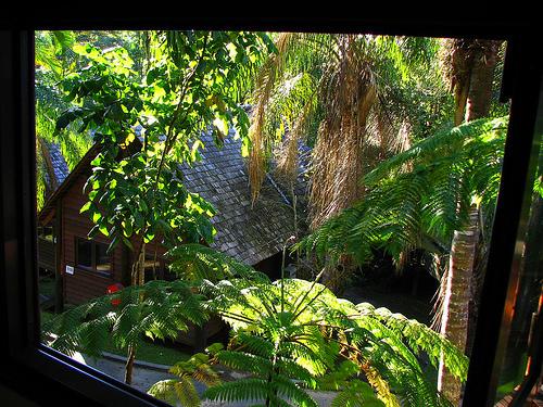 tropical Kuranda Australia