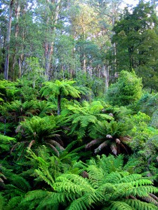 WWOOFing - Australian rain forest
