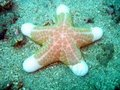 starfish on coral reef