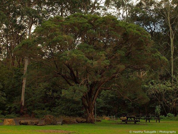 flight to sydney- Lane Cove National Park- Sydney- Australia