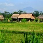 house fields volcano Ubud