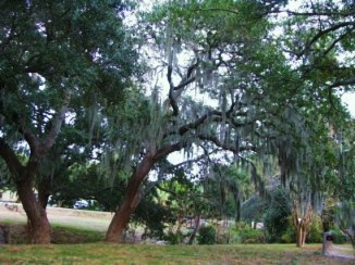 TRAVEL STORY- USA- Georgia trees
