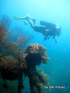 diver- coral reef- Bali