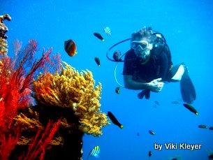 Diver - coral reef