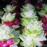 lotus flowers in Kandy, Sri Lanka