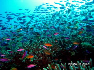 coral reef- Bali