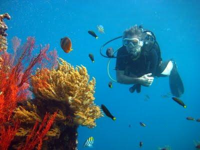 scuba Diving - Amed- Bali - Tropical reef