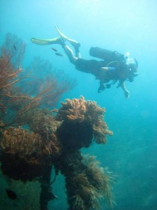 diving story- diver - coral reef- Amed-Bali