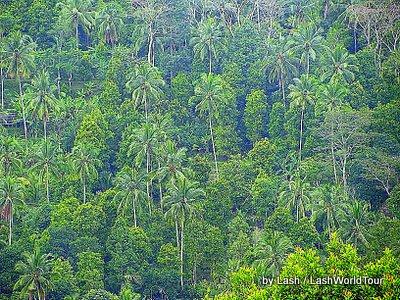 jungle-central Bali
