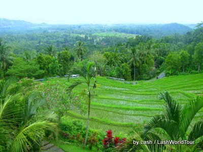 terraced rice fields overlooking South Bali coast
