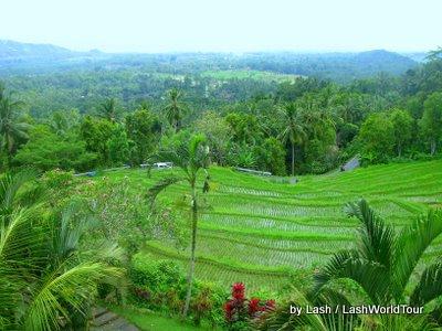 terraced rice fields overlooking South Bali coast