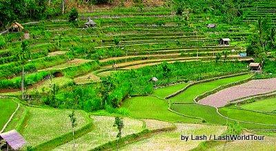 terraced rice fields- Amed- Bali