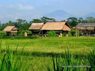 rice fields- central Bali