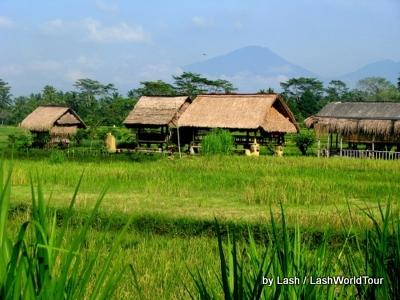 rice fields near Ubud- Bali