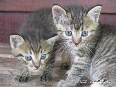 travel story-kittens-Shanghai-china