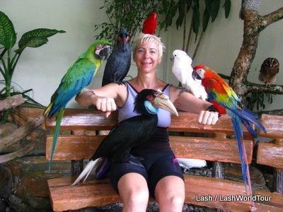 Kuala Lumpur Bird Park • World Largest Free-Flight Walk-In