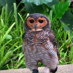 Spotted Owl at Kuala Lumpur Bird Park