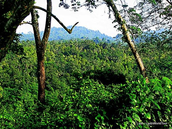 Dense rain forest covers Mount Raya- Langkawi