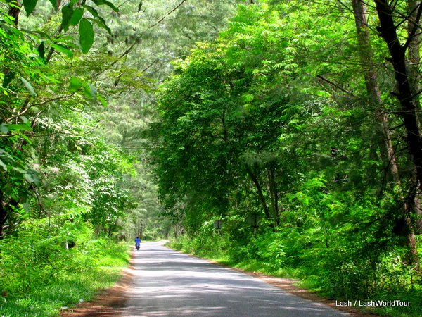 Flat forested road on Langkawi