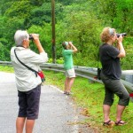 bird watching tour- langkawi- junglewalla