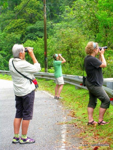 bird watching tour- langkawi- junglewalla