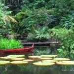 tropical pond- Penang Spice garden