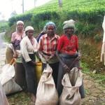 tea plantation workers- Sri Lanka
