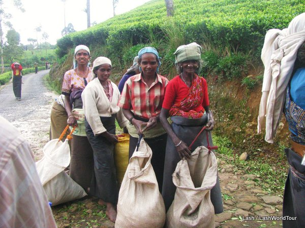 tea plantation workers- Sri Lanka