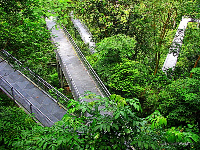 Elevated Walkways - Forest - Singapore