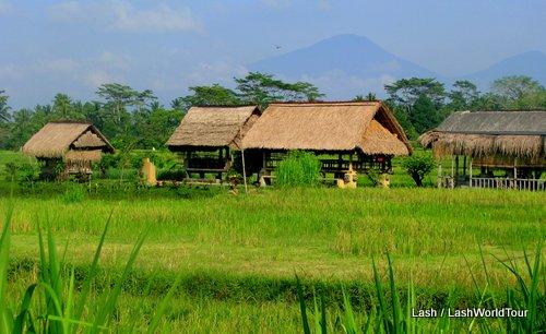 rice fields- Mt Batur- Bali