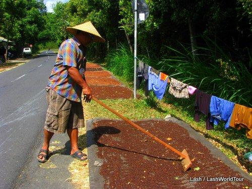 cloves- Kintamani- Bali