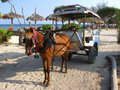 ponies - Gili Meno - Lombok - Indonesia