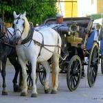 Cordoba - Horse and carriage - Spain