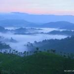 tea plantations - Sri Lanka