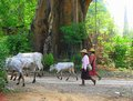 Burmese People -Myanmar