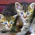 python snake - two kittens
