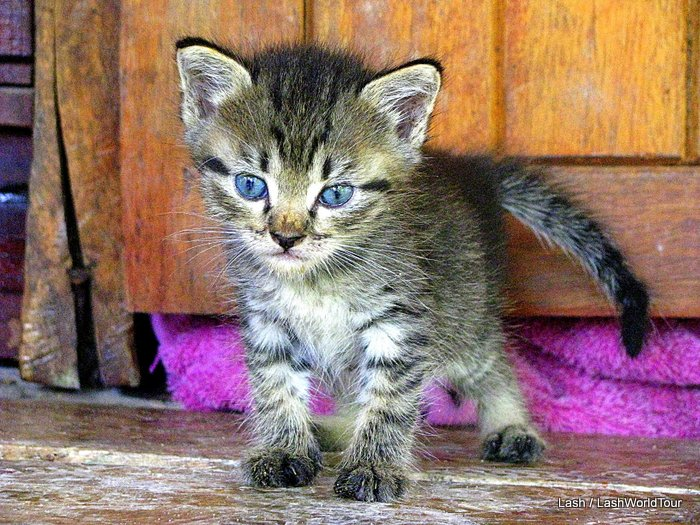 photos of cats - gorgeous tabby kitten
