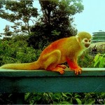 Amazon animal sightings like this monkey at Ariau Amazon Towers Hotel
