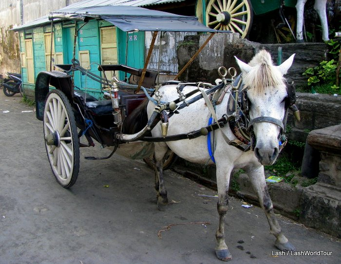 cidomo - pony taxi in Java - Indonesia