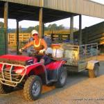 LashWorldTour working on a farm in NZ