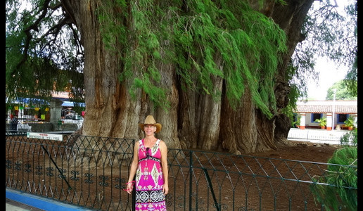 Lash at the world's largest tree - Oaxaca Valley