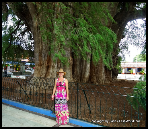 Lash at the world's largest tree - Oaxaca Valley