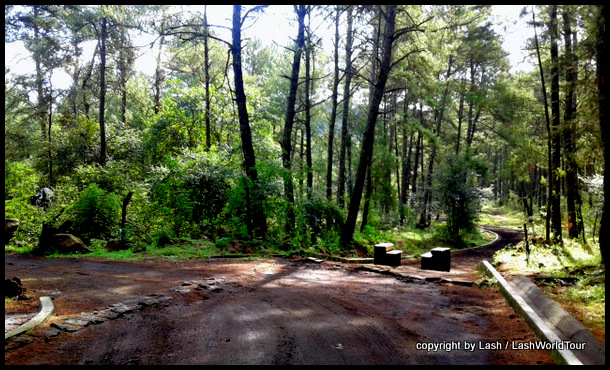 lovely forest near Angahuan
