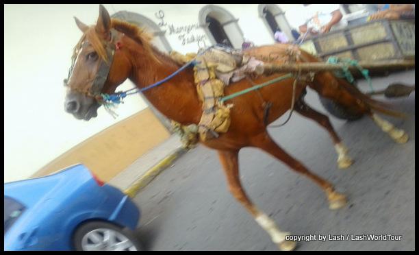 horse & cart in Leon