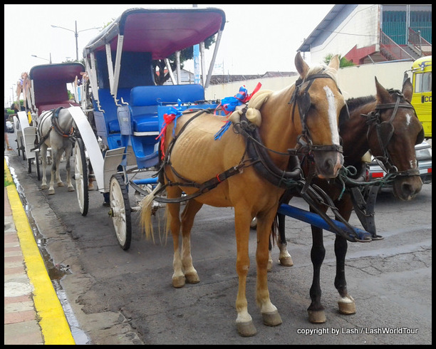 horse & carriage in Granada