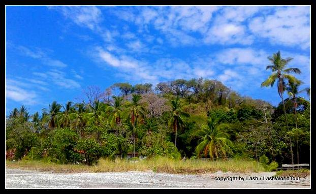 Trees backing Playa Samara